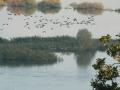 Hitzacker Hochwasser 005.jpg