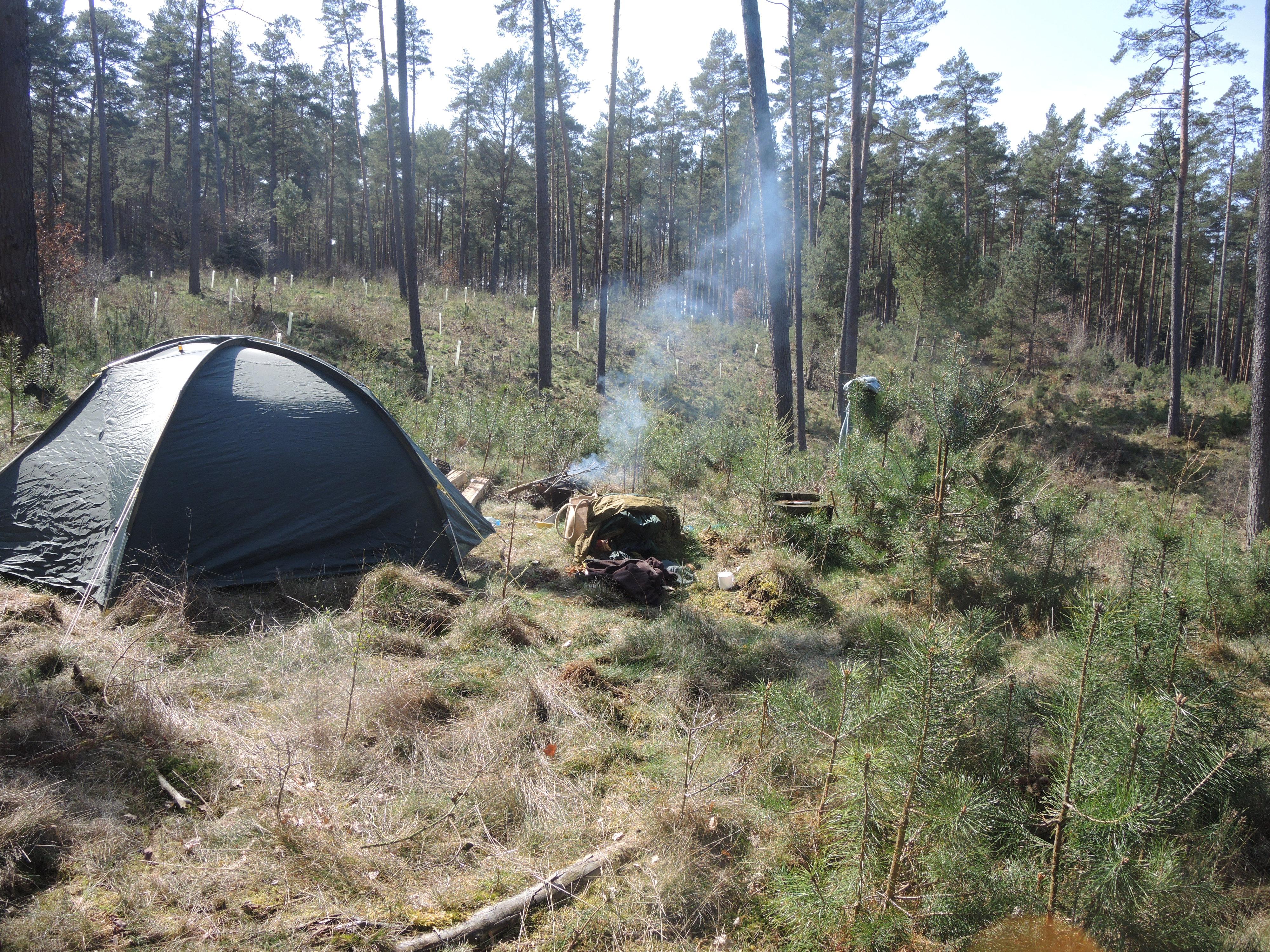 Wald mit Wuchshüllen und Zelt