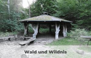 Wald Wildnis Wendland